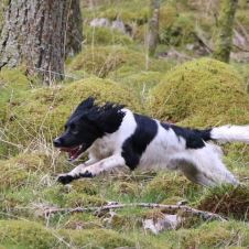 jaktprove-for-spaniels-nm
